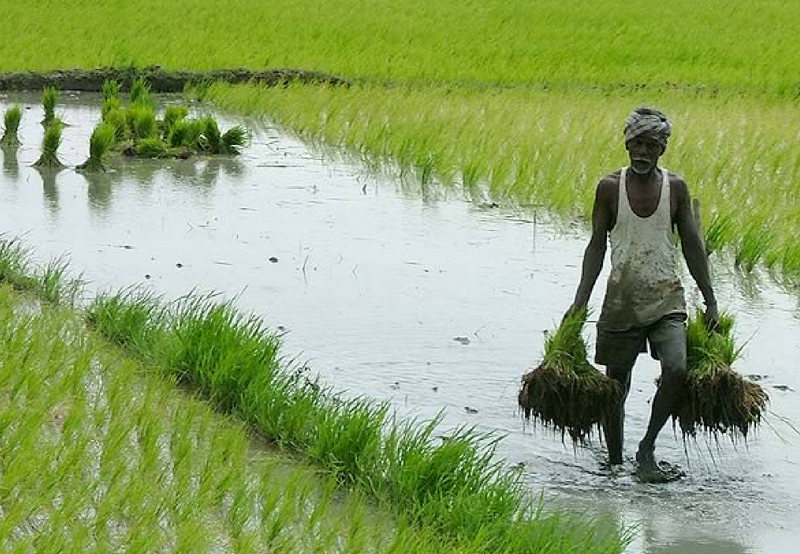 Solar: a Game Changer for India's Agricultural Sector