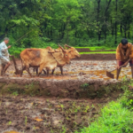 Maharashtra Retenders 750 MW of Solar for Agricultural Feeders Due to Lack of Response