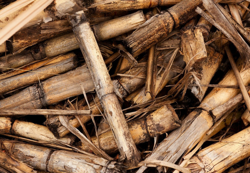 Biomass Company PRESPL Raises ₹360 Million Equity from Shell