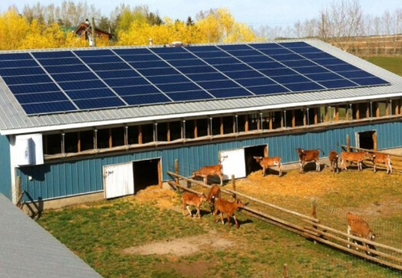 Jaipur Dairy Floats a Tender for 1.5 MW of Rooftop Solar Projects