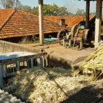MSEDCL Asked to Invite Fresh Bids for Bagasse Projects with Expired EPAs in 2020