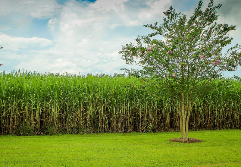 New Method Could Produce Ethanol From Plant Waste at a Low Cost