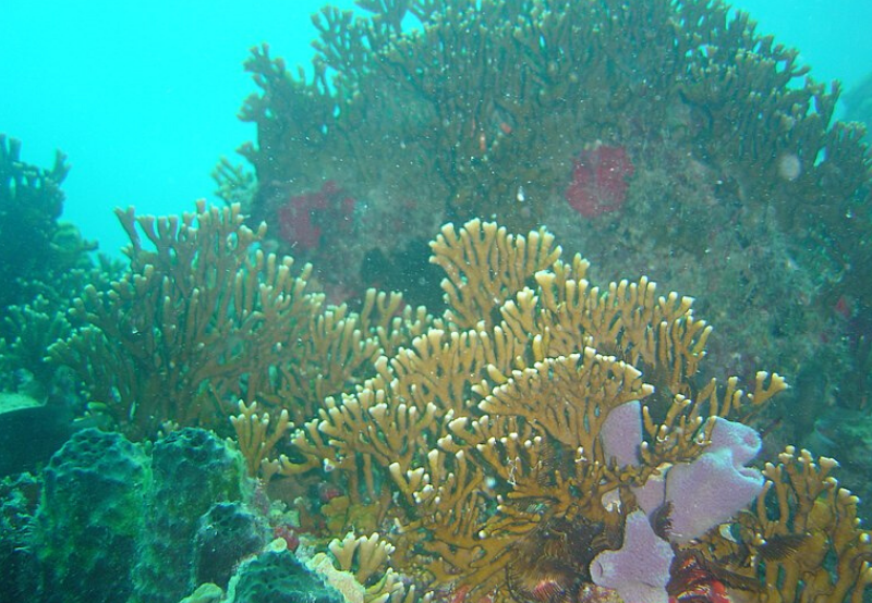Scientists Use Solar Energy to Save Coral Reefs in Gulf of Kutch