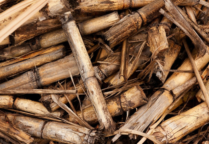 MERC Rejects Biomass Developer's Plea for Compensation After EPA Termination