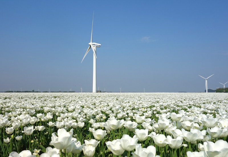 Kerala Commission Asks DISCOM to Modify PSA for 100 MW of Wind Power with SECI