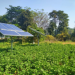 Punjab Invites Applications from Farmers Interested in Installing Solar Pumps