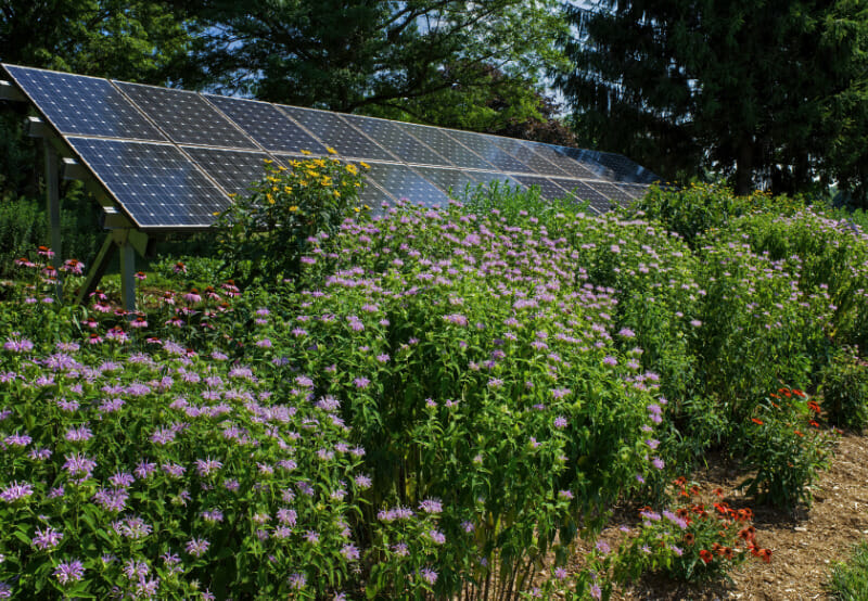 Lightsource bp Starts Construction on Pollinator-Friendly Solar Farm in the US