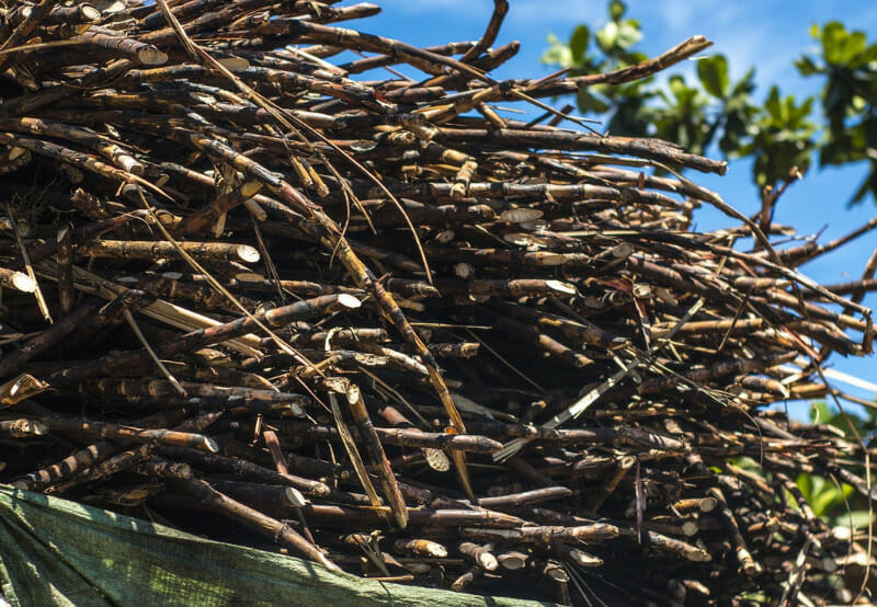 MNRE's Biomass-Based Cogeneration Program Extended by a Year